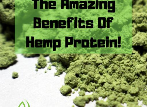 hemp plant based protein
